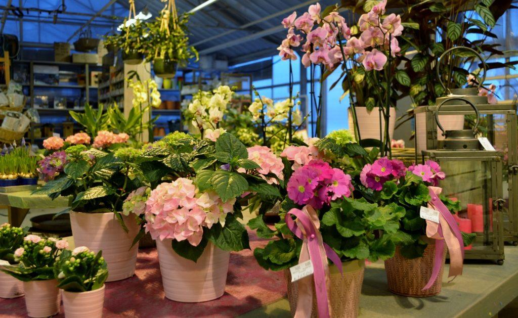 En bild på blommor i kruka som står på en ett bord inne på Solhems handelsträdgård